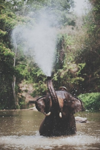 elephant spray